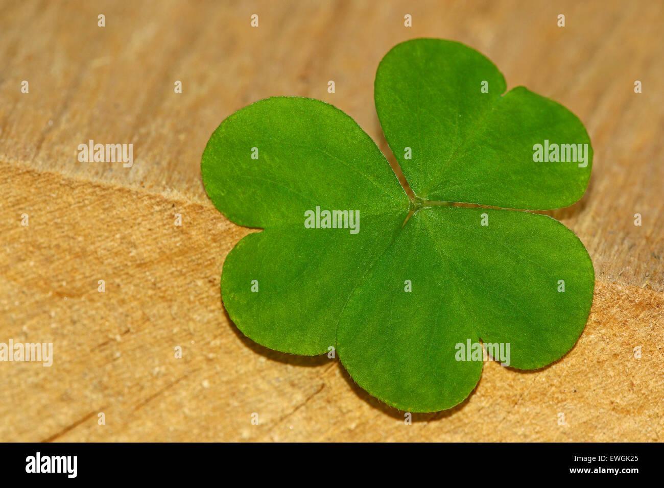 Clover Leaf Stock Photos Clover Leaf Stock Images Alamy