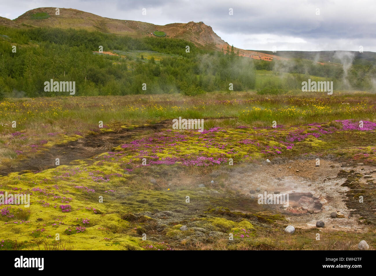 Geothermal area in Iceland - Stock Image