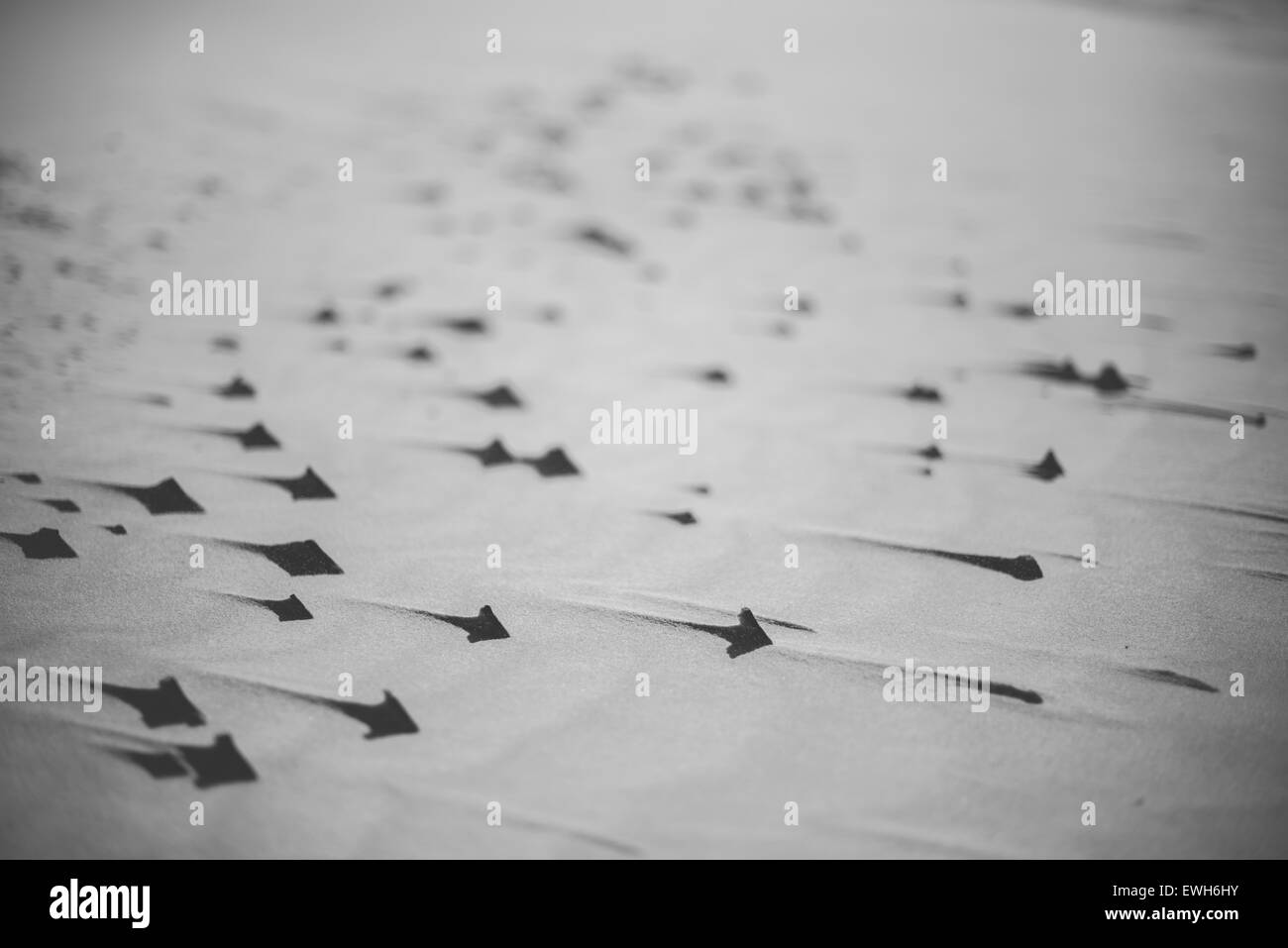 Splinters in sand, close-up, black and white Stock Photo