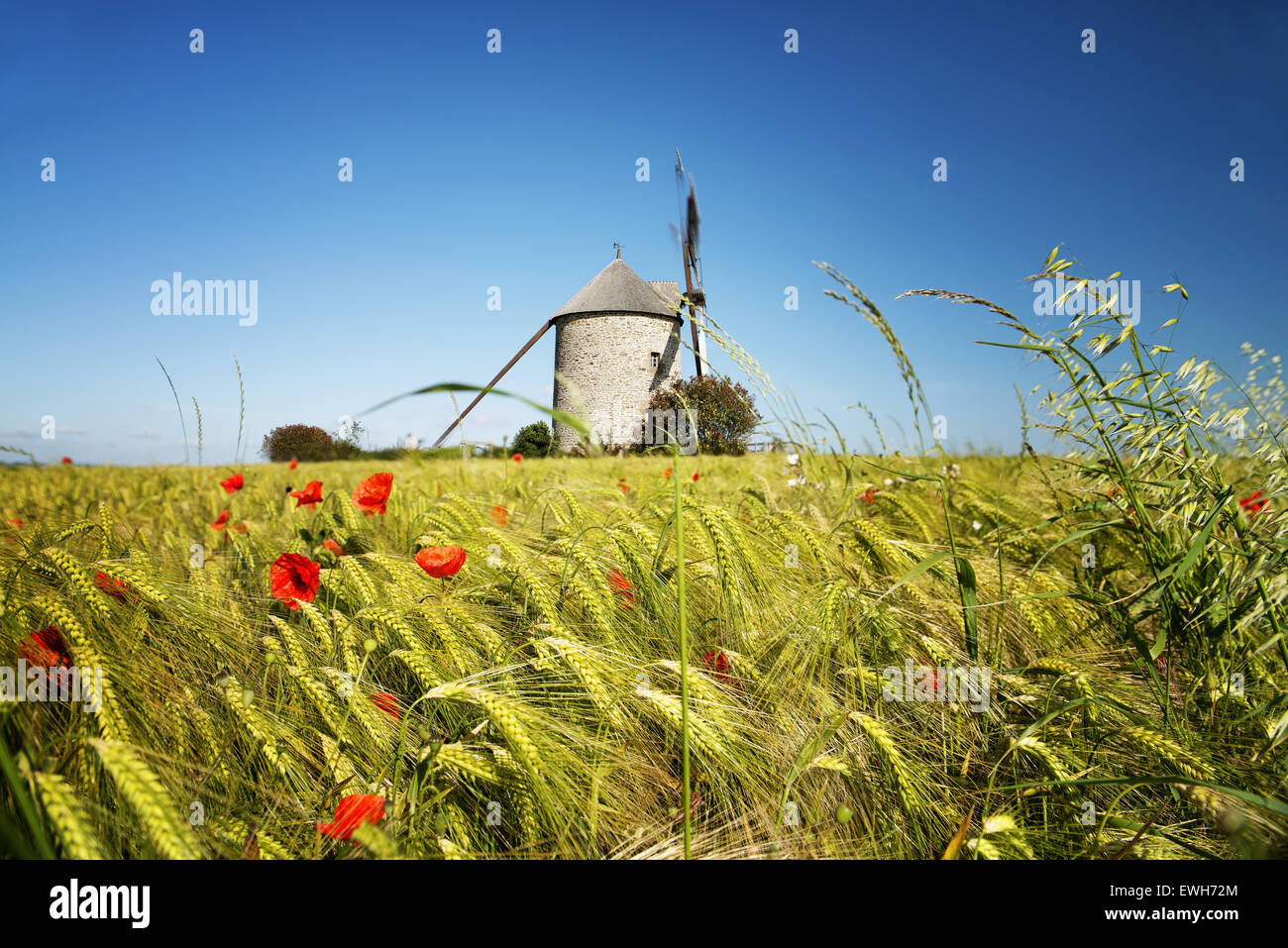 France, the Moidrey windmill in Pontorson in Normandie - Stock Image