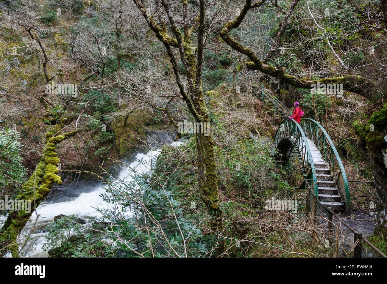 Footbridge over the Mynach Falls, Devil's Bridge, Rheidol Valley, Ceredigion, Wales - Stock Image