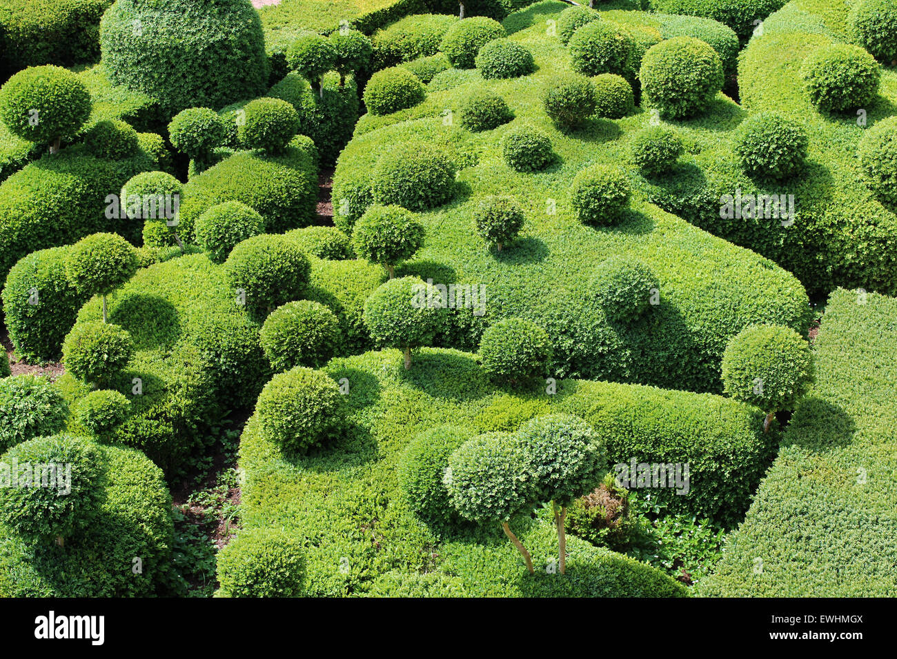 Crazy Fantasy Boxwood Topiary Trees And Hedges At Chateau Du Stock Photo Alamy