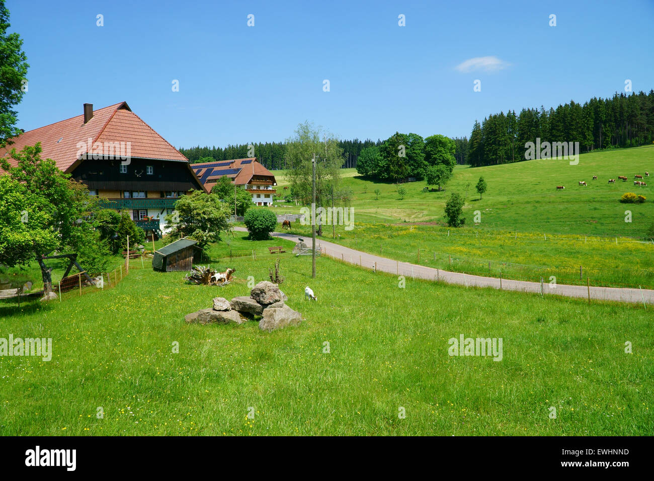 Beautiful landscape with meadows and pastures and country houses in the Black Forest - Stock Image