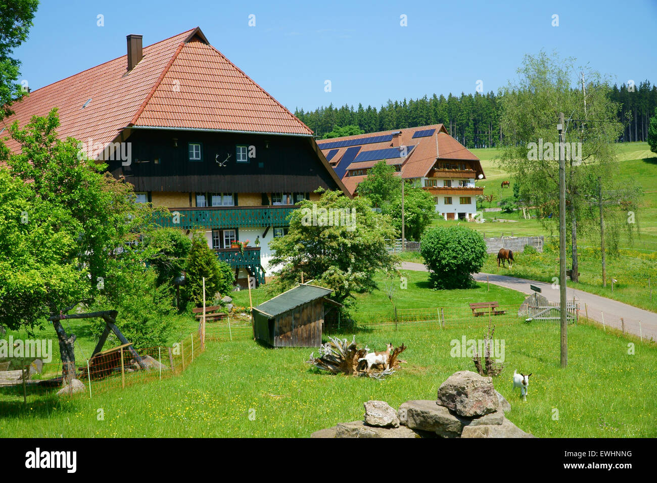 Two Country Houses surrounded by meadows and pastures in the Black Forest - Stock Image
