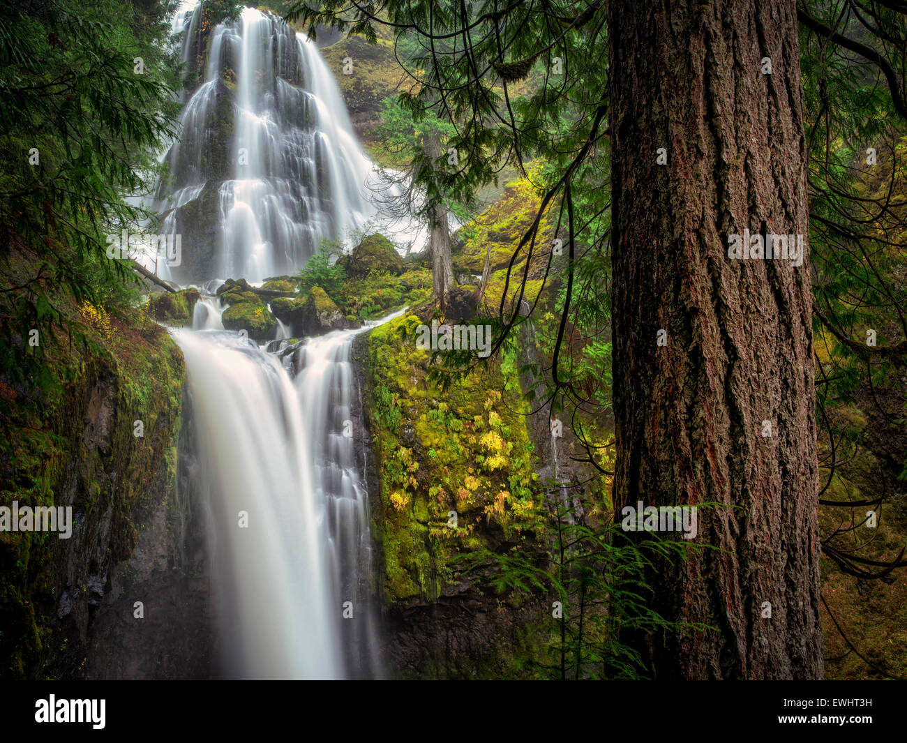 Falls Creek Falls, Washington. - Stock Image