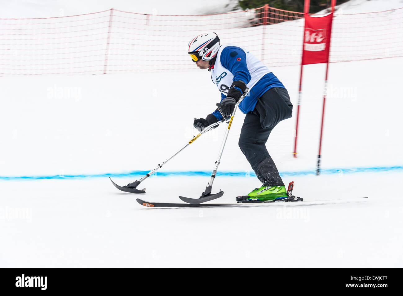 A one-legged skier racing downhill in a giant slalom race - Stock Image