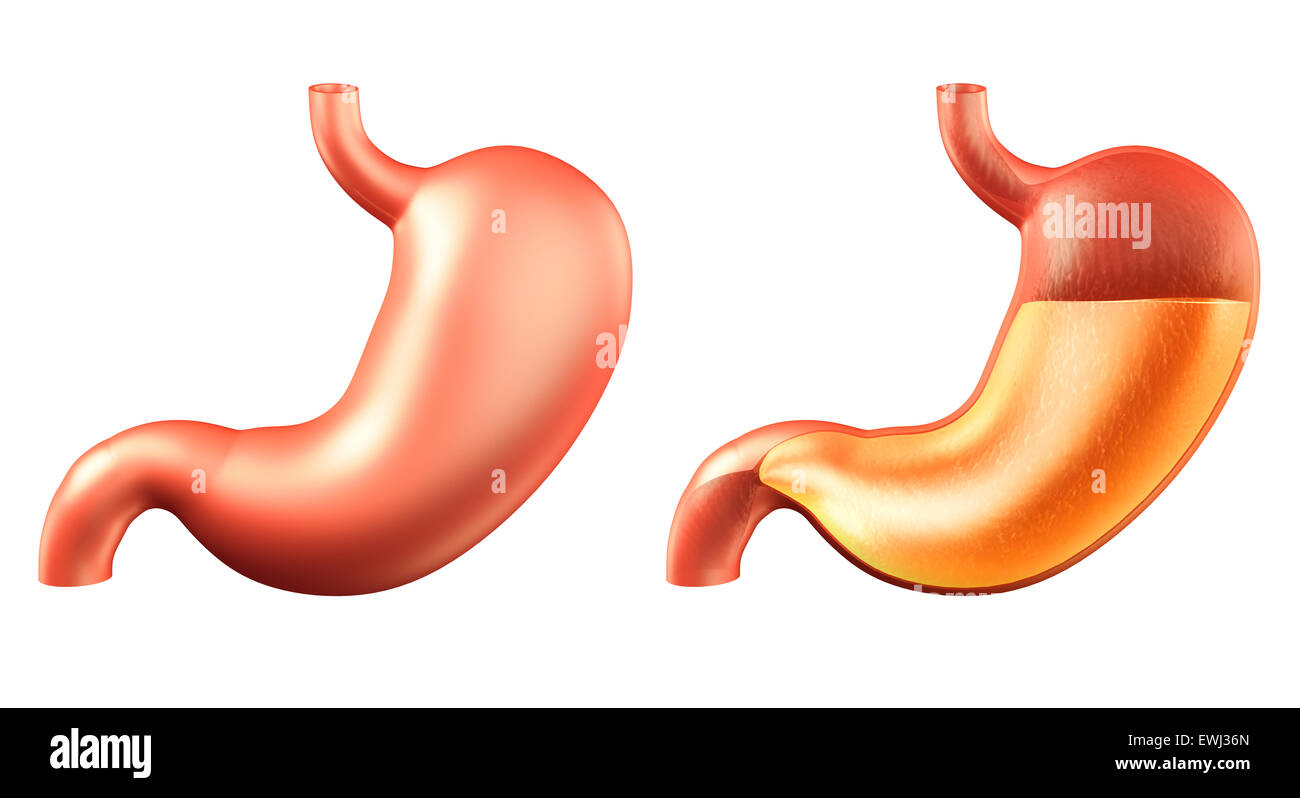 Human stomach, outside and inside filled with stomach acid, medical 3D illustration isolated on white background - Stock Image