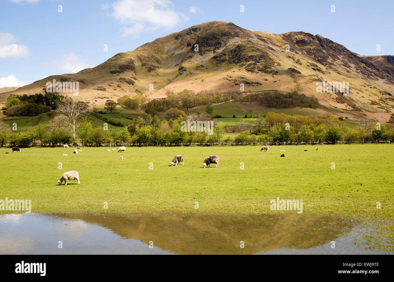 Landscape view of High Snockrigg Fell hill and flooded field, Buttermere, Cumbria, England, UK - Stock Image