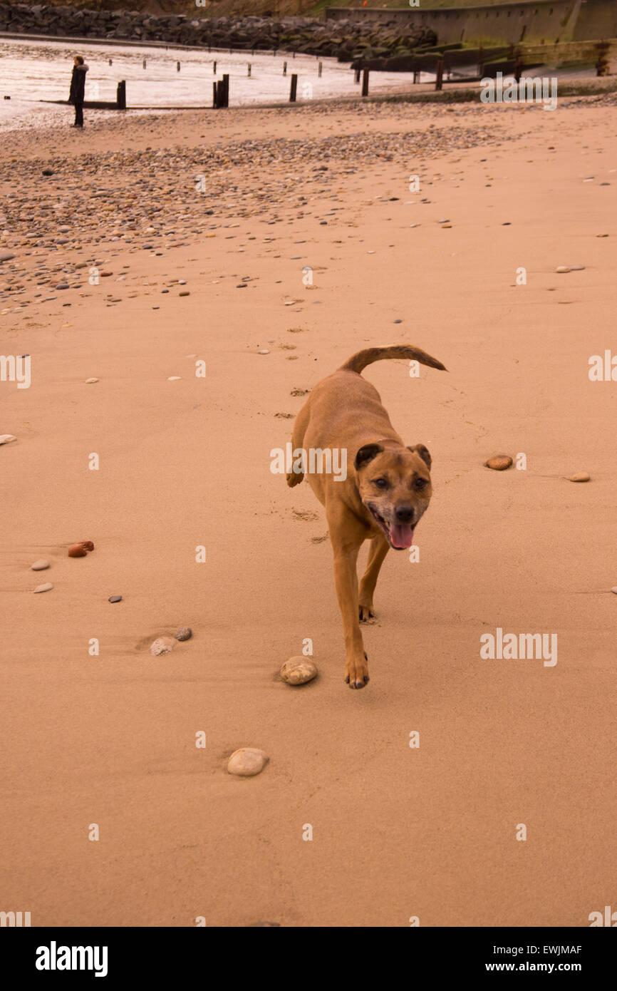 Dog on the Beach - Stock Image