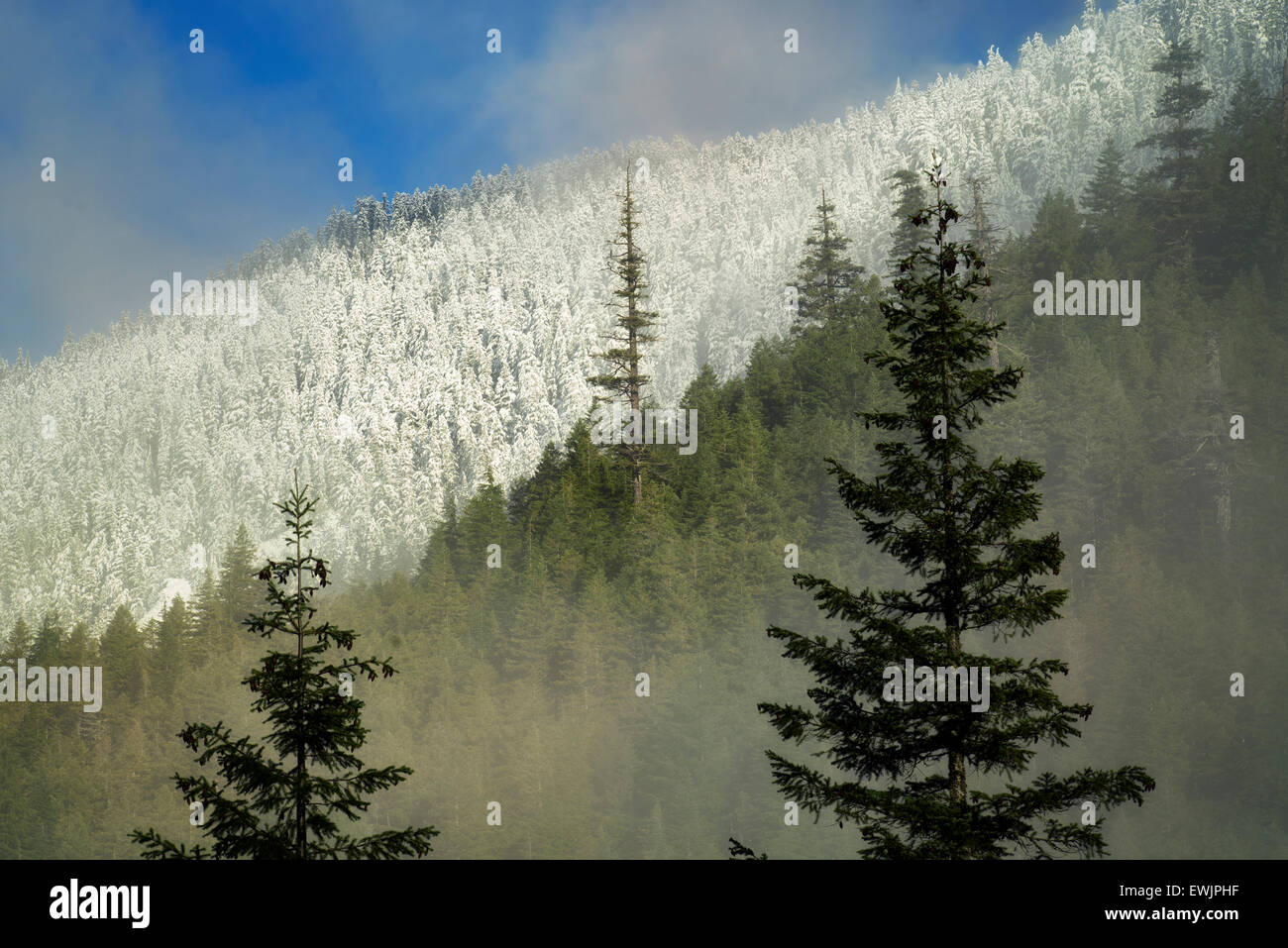 First snow in mountains near Opal Creek. Oregon Cascade Mountains. - Stock Image