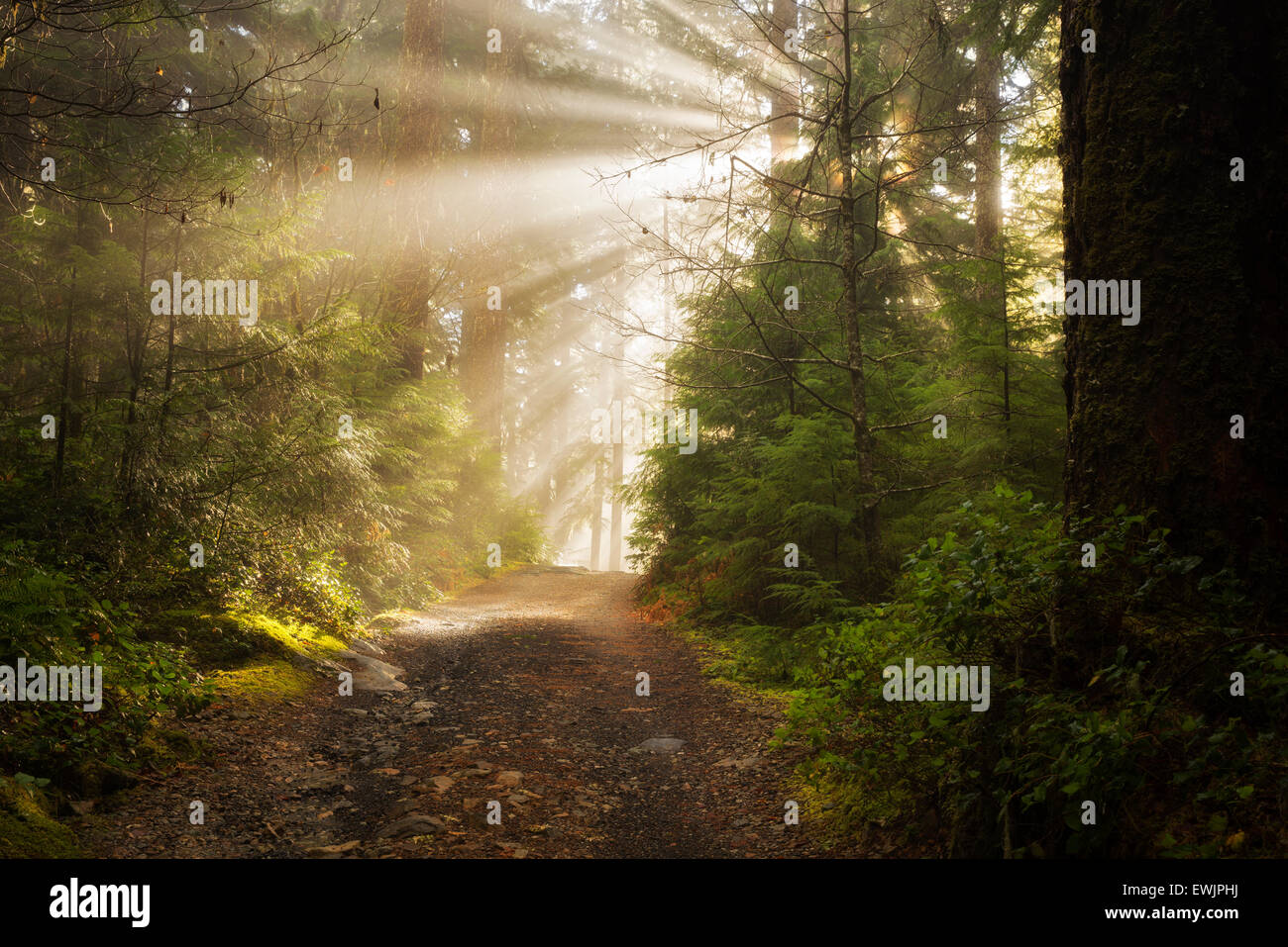 Road/trail along Opal Creek with sunburst/godrays. Opal Creek Wilderness, Oregon - Stock Image