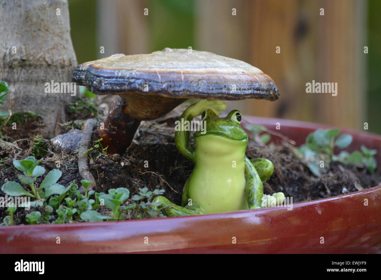 comical,frog, mushroom, home, - Stock Image