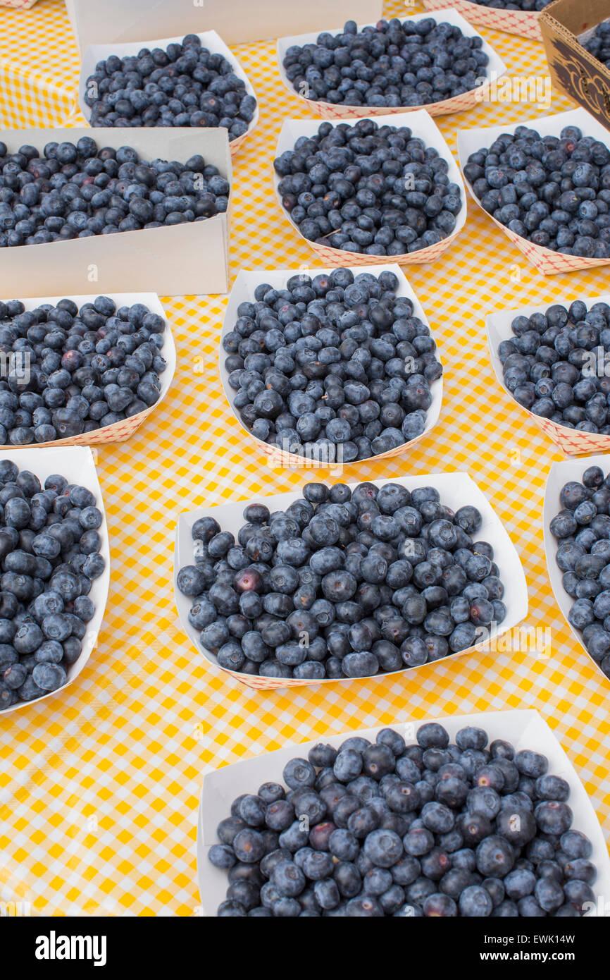 Baskets of fresh, local, organic blueberries at Sebastopol farmer's market, Sonoma County, Calif. - Stock Image