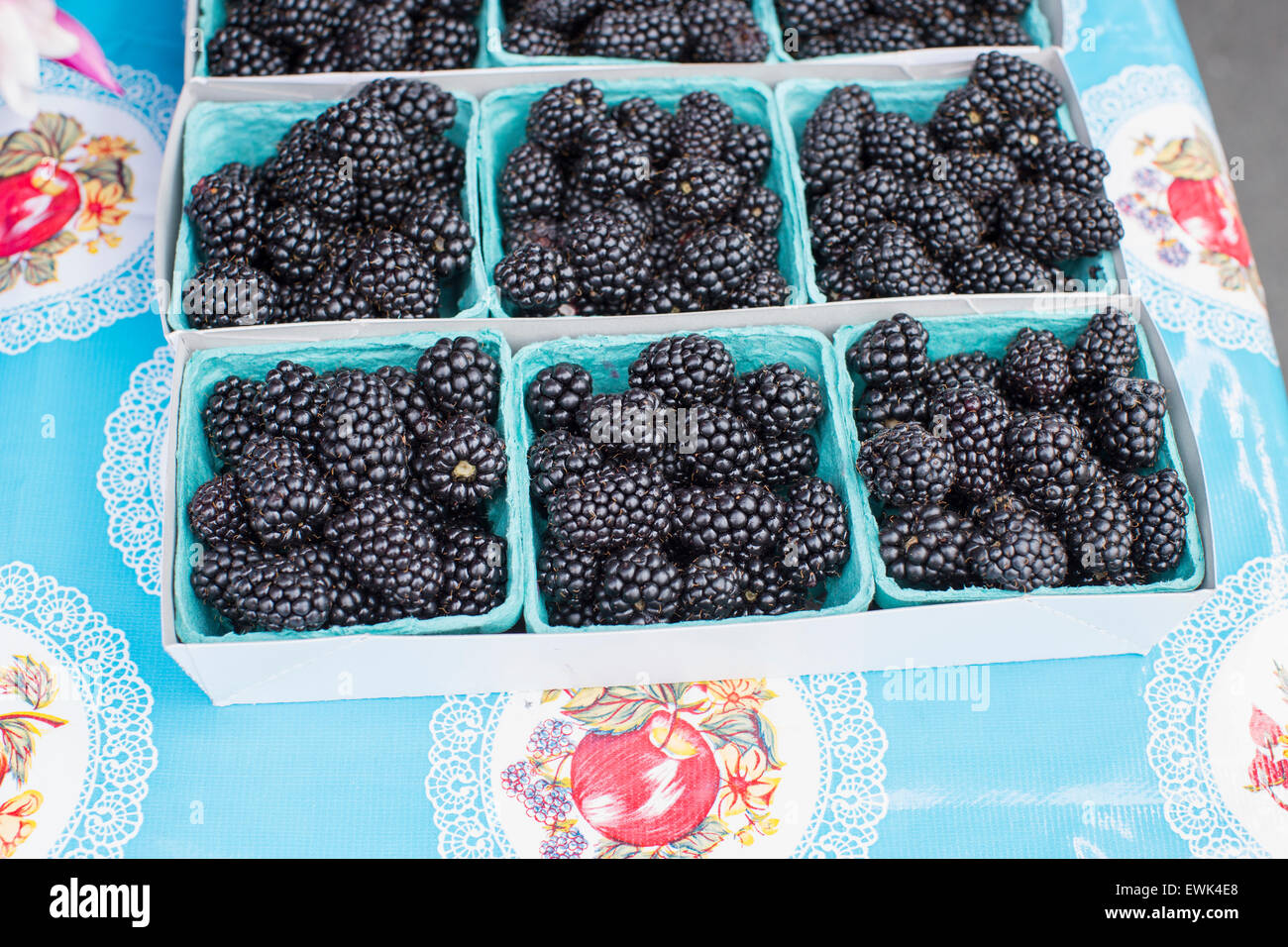 Baskets of fresh, local, organic blackberries at Sebastopol farmer's market, Sonoma County, Calif. - Stock Image