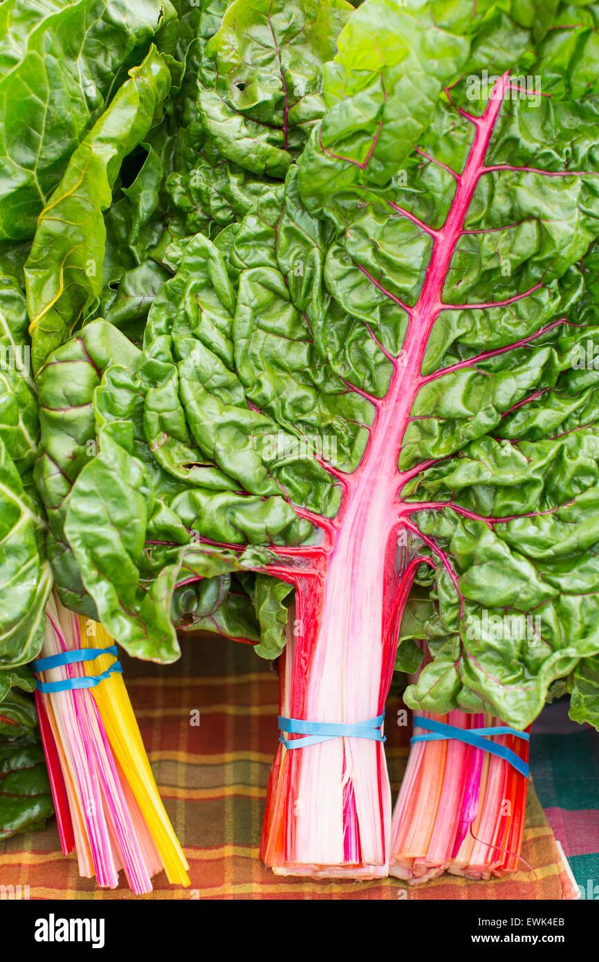 Fresh, local, organic rainbow chard at Sebastopol farmer's market, Sonoma County, California - Stock Image
