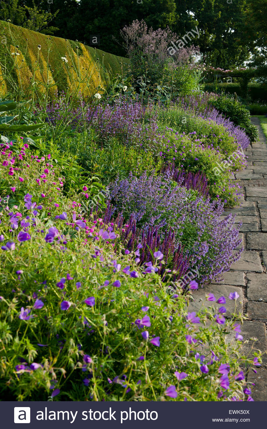 herbaceous border - Stock Image