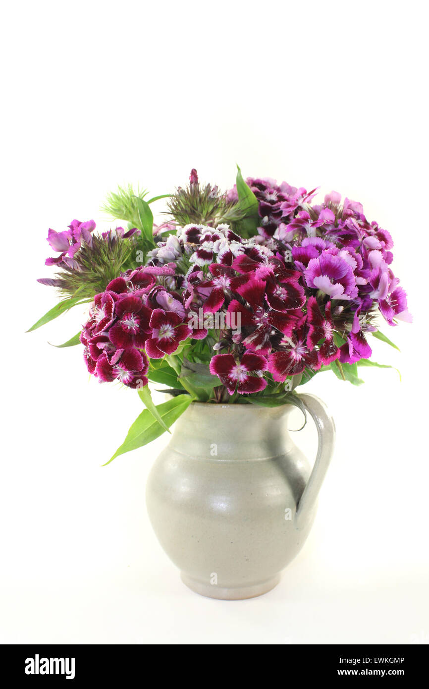 a bouquet of Sweet William on a light background - Stock Image
