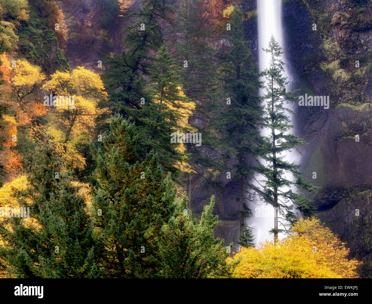 Multnomah Falls with fall color. Columbia River Gorge National Scenic Area, Oregon - Stock Image