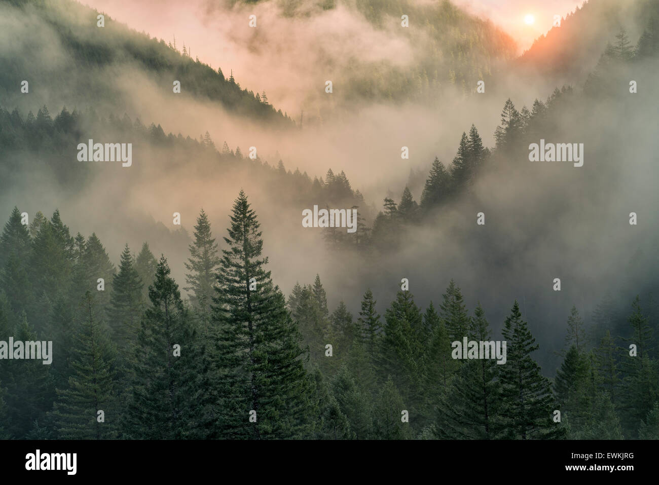 Sunrise through fog in mountains near Opal Creek, Oregon - Stock Image