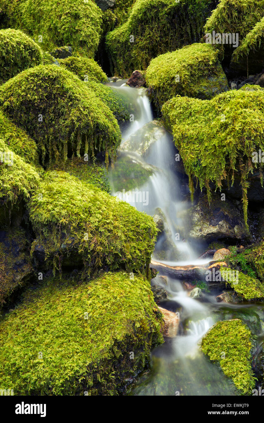 Moss covered rocks and stream. Opal Creek Wilderness, Oregon - Stock Image