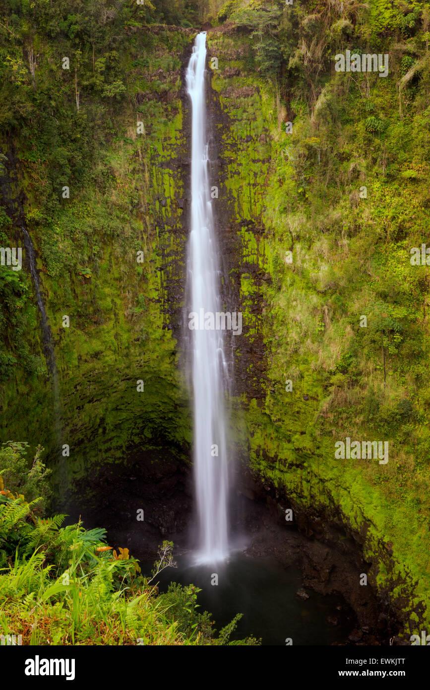 Akaka Falls. Akaka Falls State Park. Hawaii, The Big Island - Stock Image