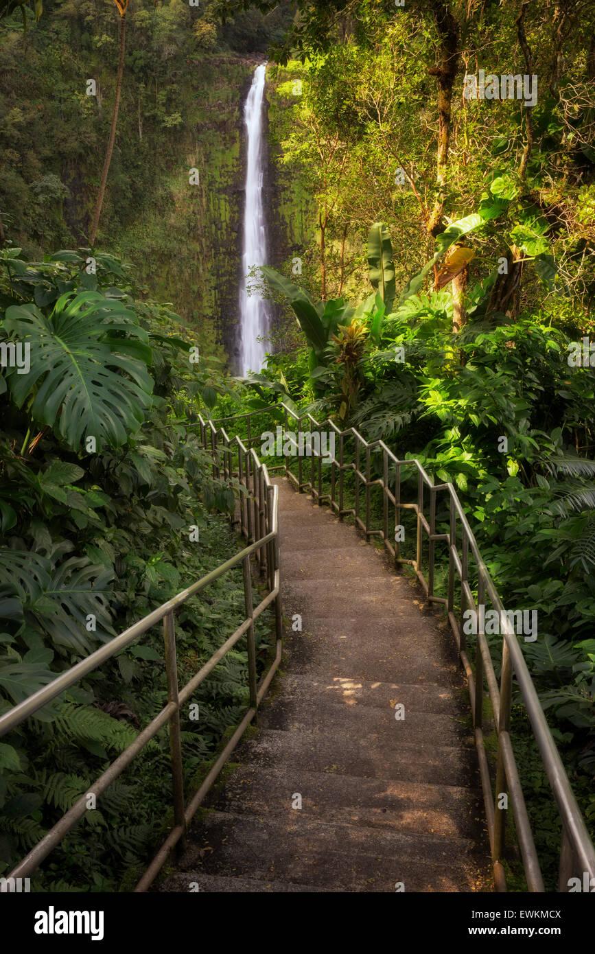Pathway to Akaka Falls. Akaka Falls State Park. Hawaii, The Big Island - Stock Image