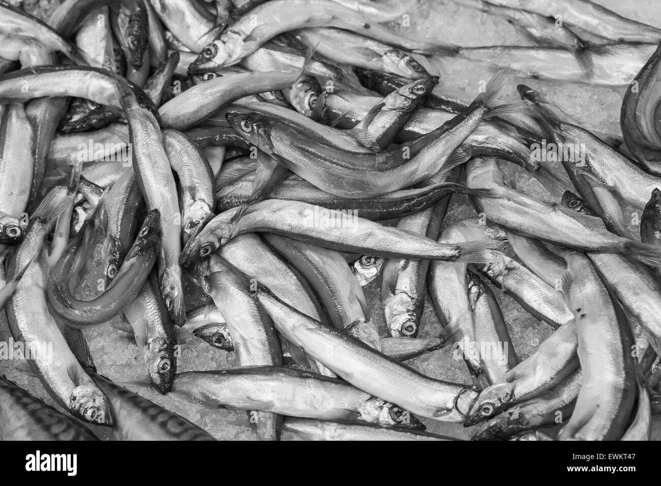 Closeup of small raw whitebait fish. - Stock Image