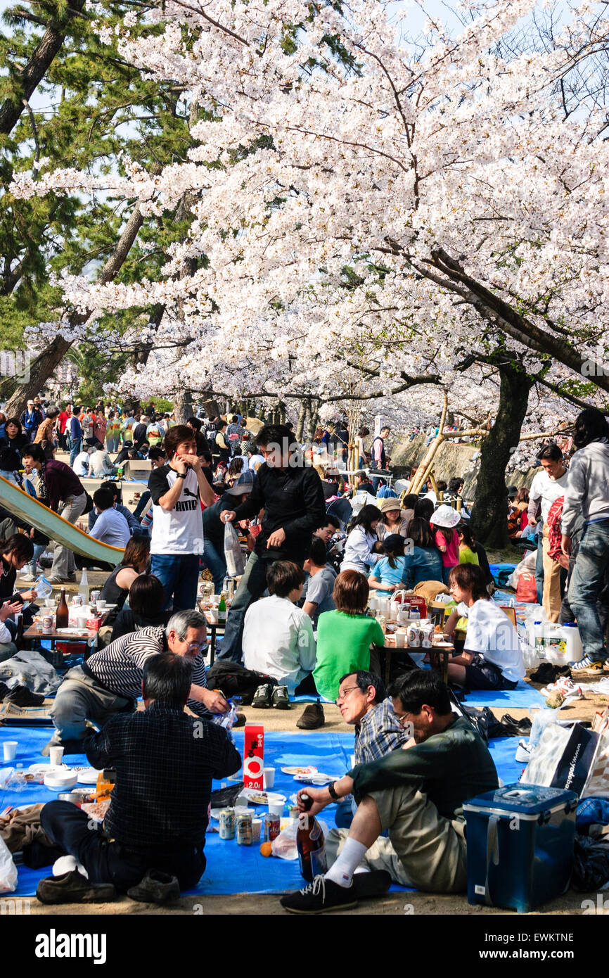 Japan, Shukugawa. Cherry blossom parties of mainly teenages sitting on blue plastic mats in the spring sunshine. - Stock Image