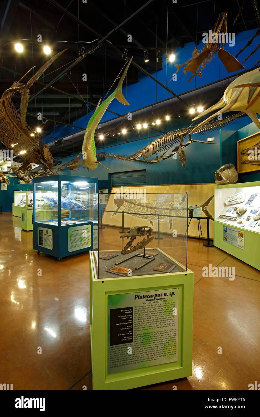 Prehistoric Ocean Hall, Dinosaur Resource Center, Woodland Park, Colorado USA - Stock Image