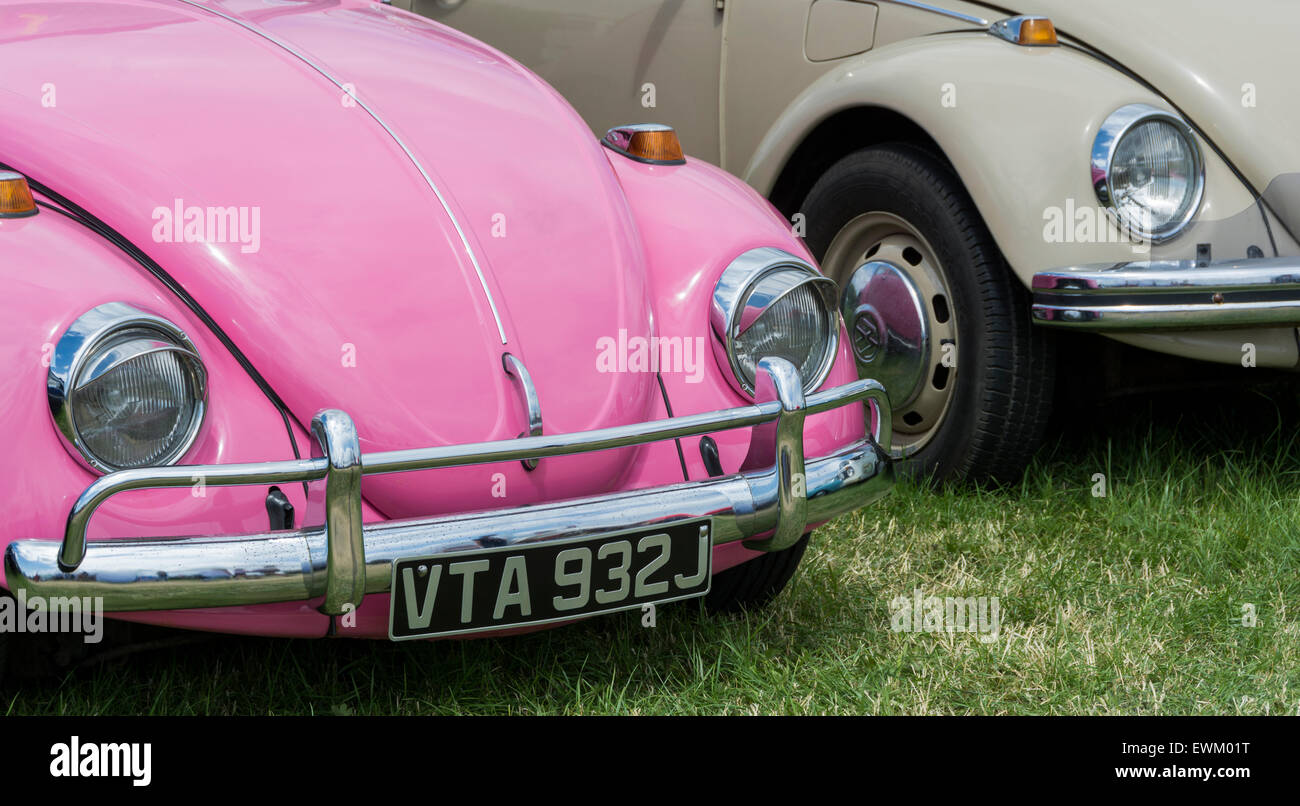 Pink and beige, Classic Volkswagen Beetles lined up  at Volksfest Bristol. - Stock Image