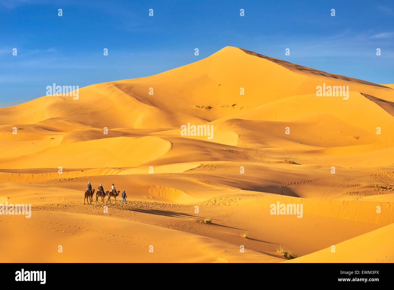 Camel caravan, Erg Chebbi desert near Merzouga, Sahara, Morocco - Stock Image