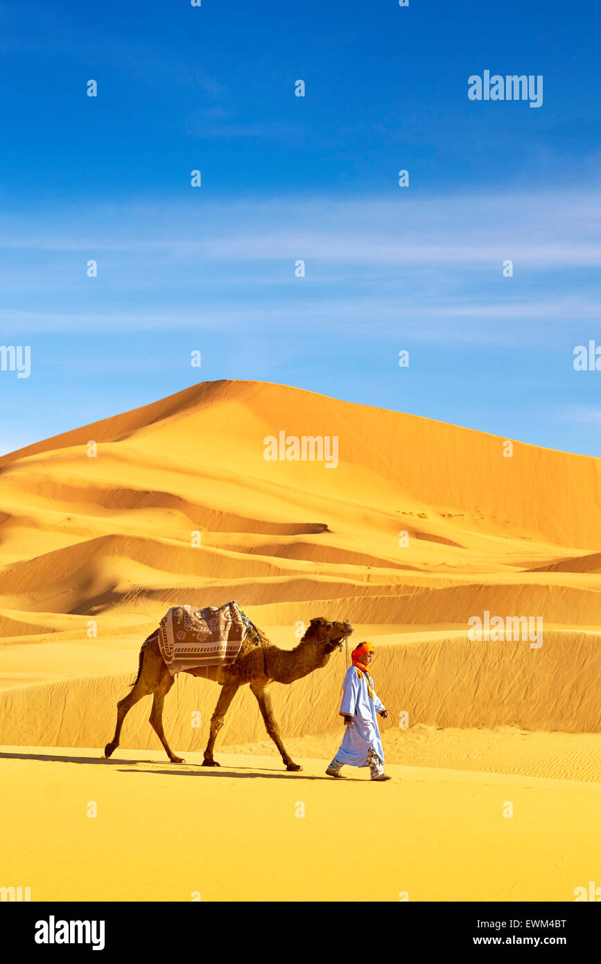 Berber man with his camel, Erg Chebbi desert near Merzouga, Sahara dunes, Morocco - Stock Image