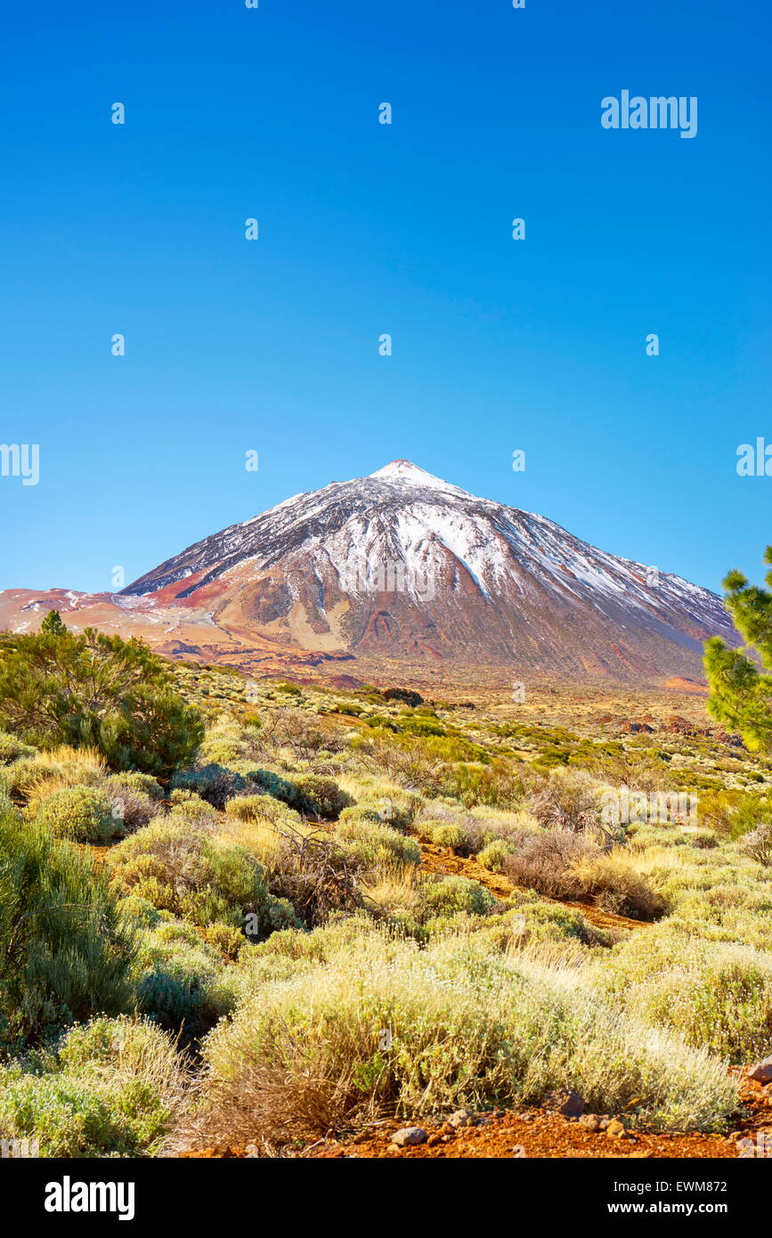 Teide National Park, Canary Islands, Tenerife, Spain - Stock Image