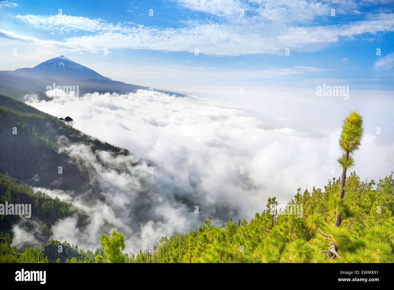 Tenerife - Teide Volcano Mount above sea of clouds, Canary Islands, Spain - Stock Image