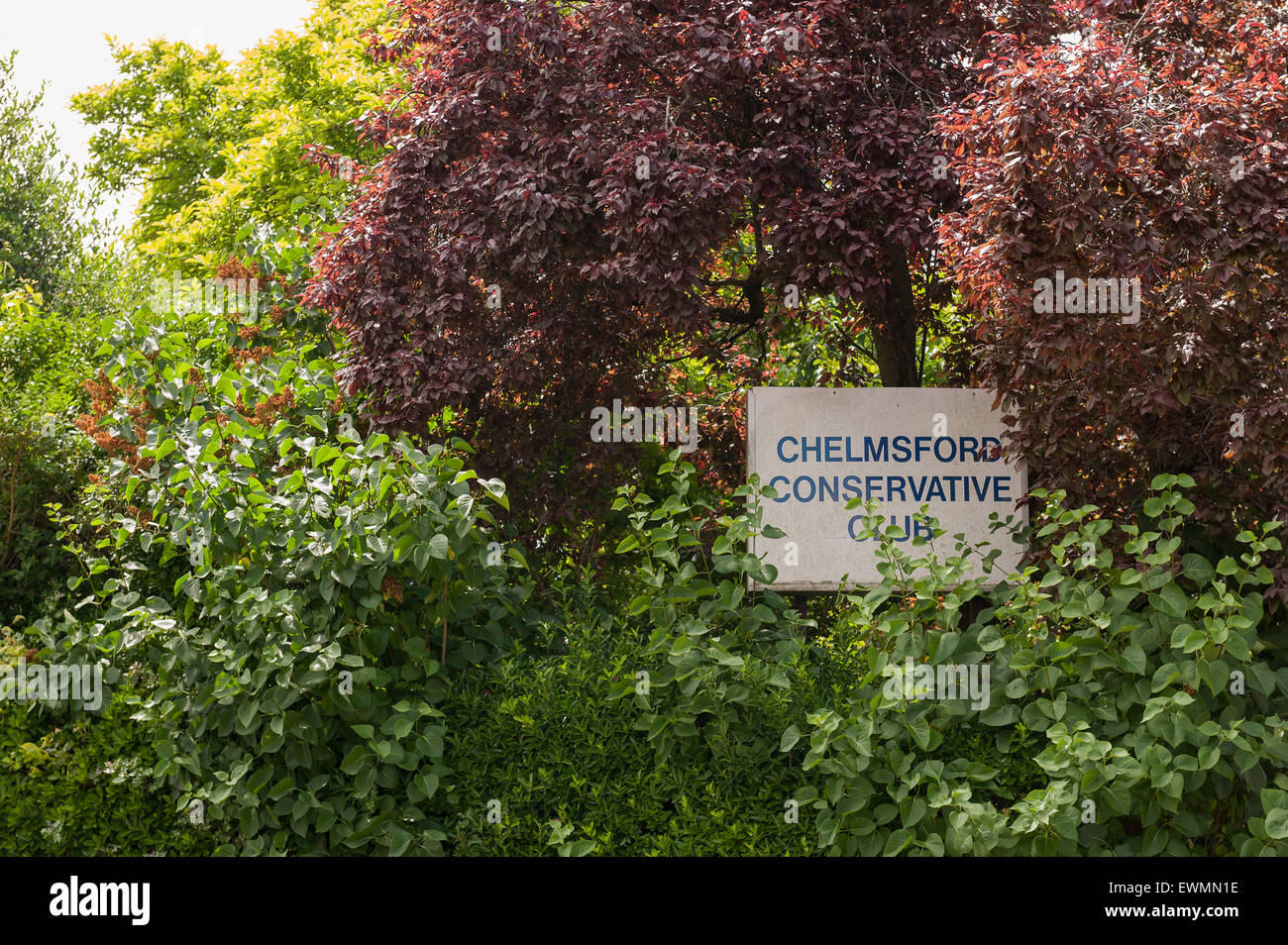 Overgrown and hidden sign of governing conservative party club headquarters in Chelmsford - Stock Image