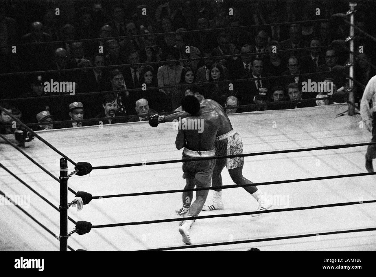 Muhammad Ali and Joe Frazier battle it out for the World Heavyweight Championship in Madison Square Garden New York - Stock Image