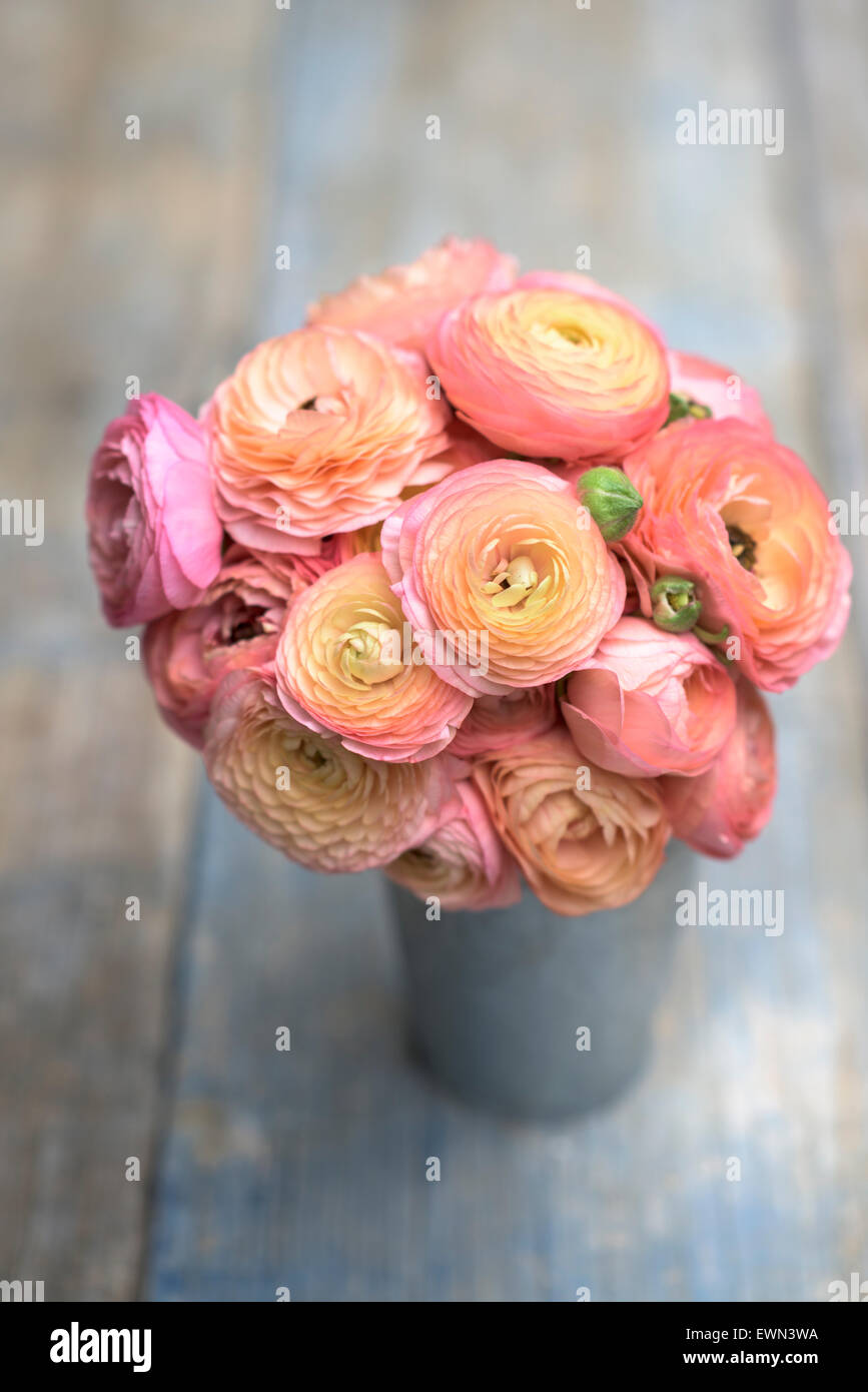 Bouquet of coral and pink ranunculus in zinc bucket - Stock Image
