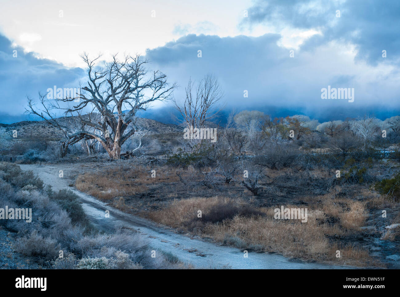 Lone tree in the wild open landscape of southern California, with a storm approaching behind. - Stock Image