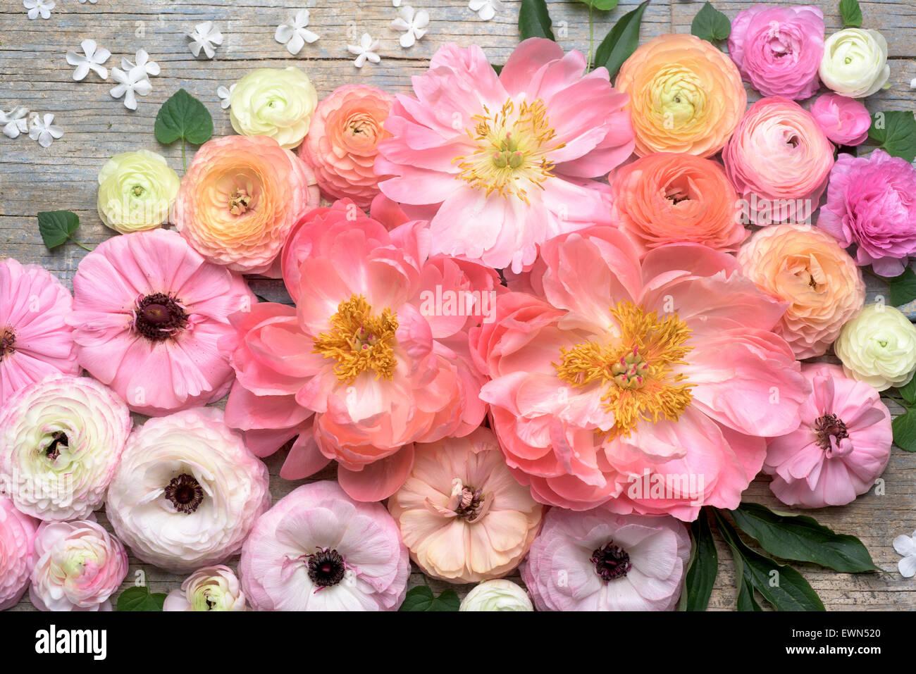 Overhead shot of ranunculus, peonies and anemones - Stock Image