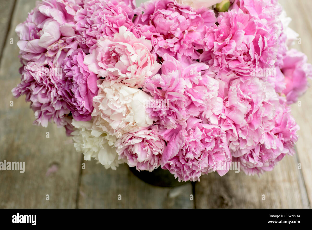 Bouquet of mixed pink and white peonies in container - Stock Image