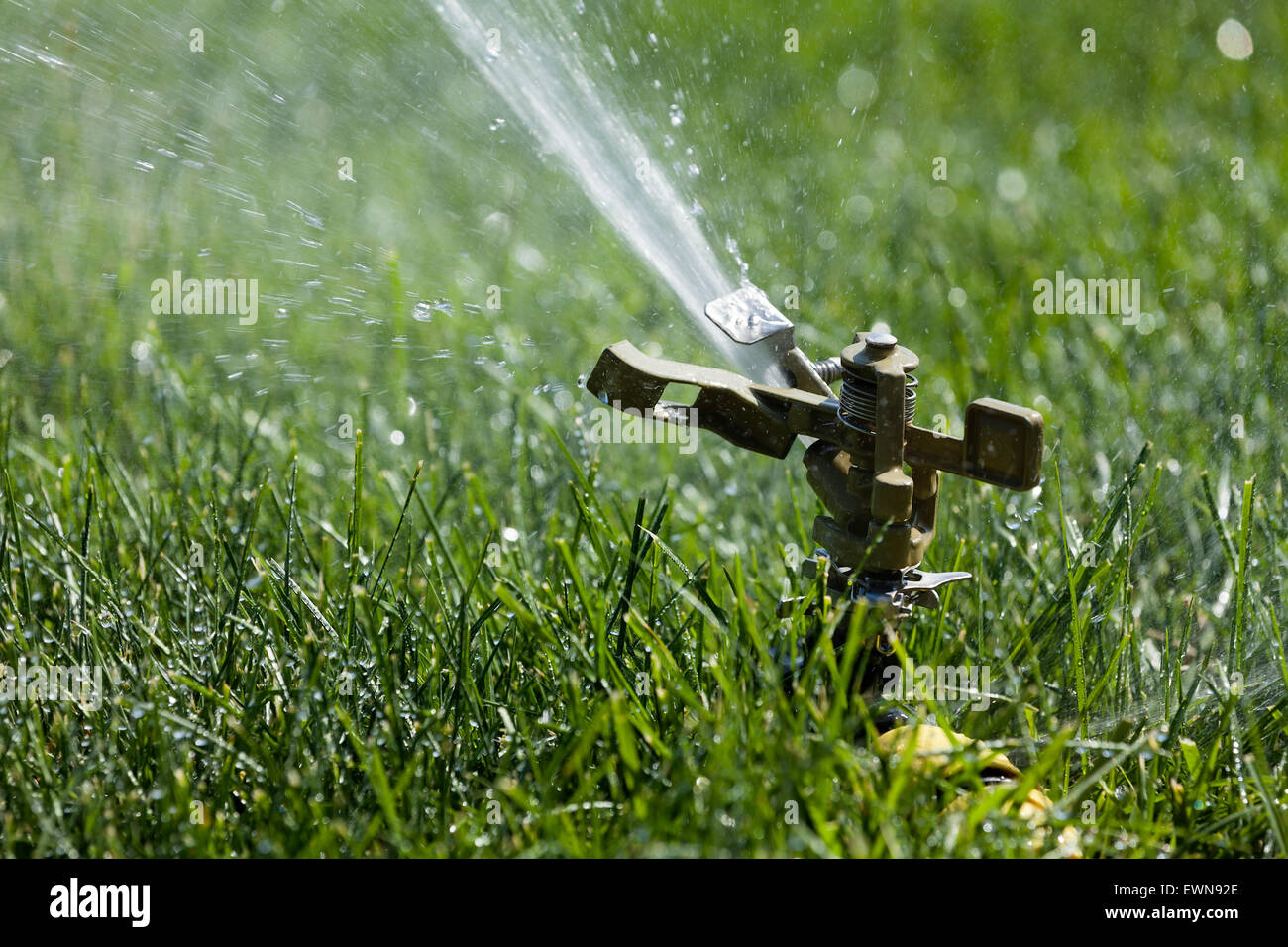 sprinkler grass automatic watering - Stock Image
