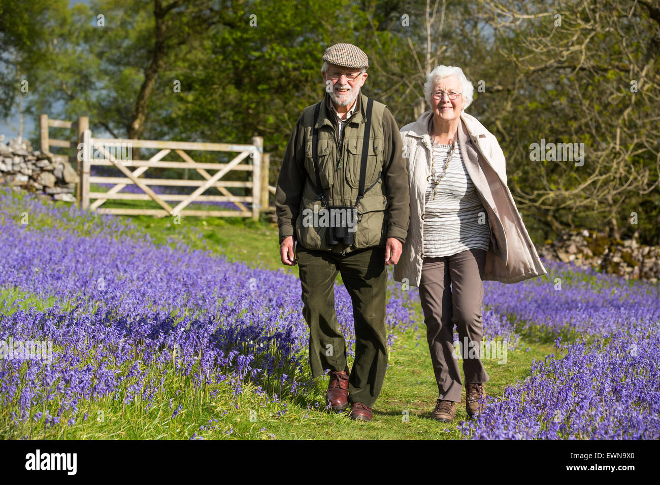 An old couple walking through Bluebells above Austwick in the Yorkshire Dales, UK. - Stock Image