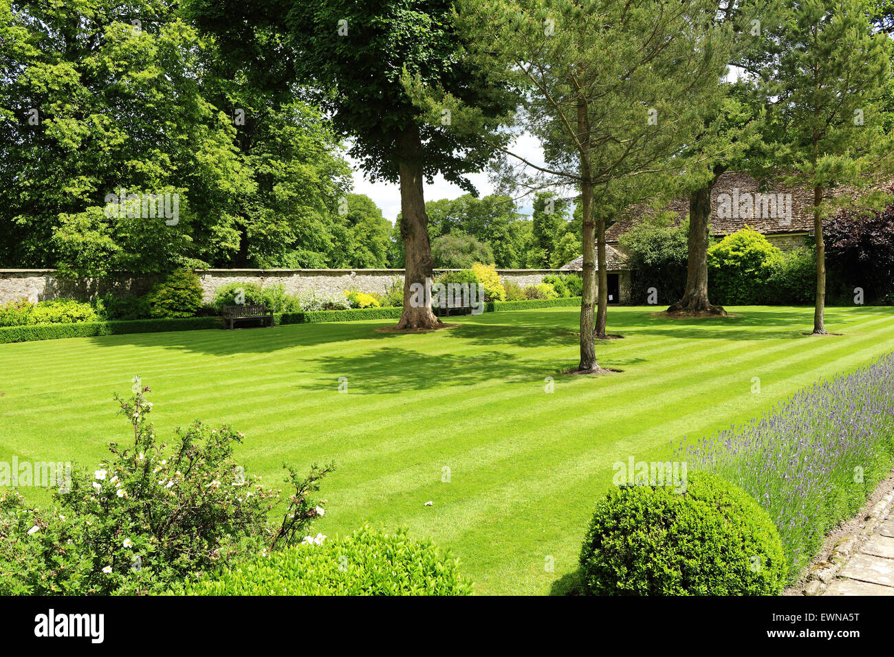Lush lawn area in a formal English Garden with wall and lavender border - Stock Image