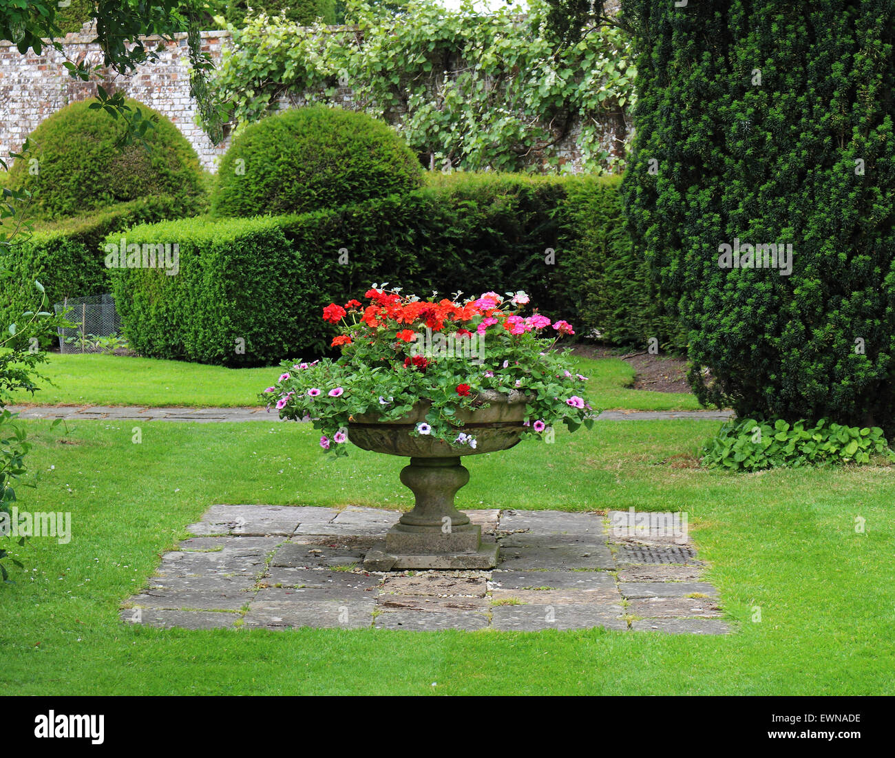 English walled Garden with flower filled planter and topiary hedging - Stock Image