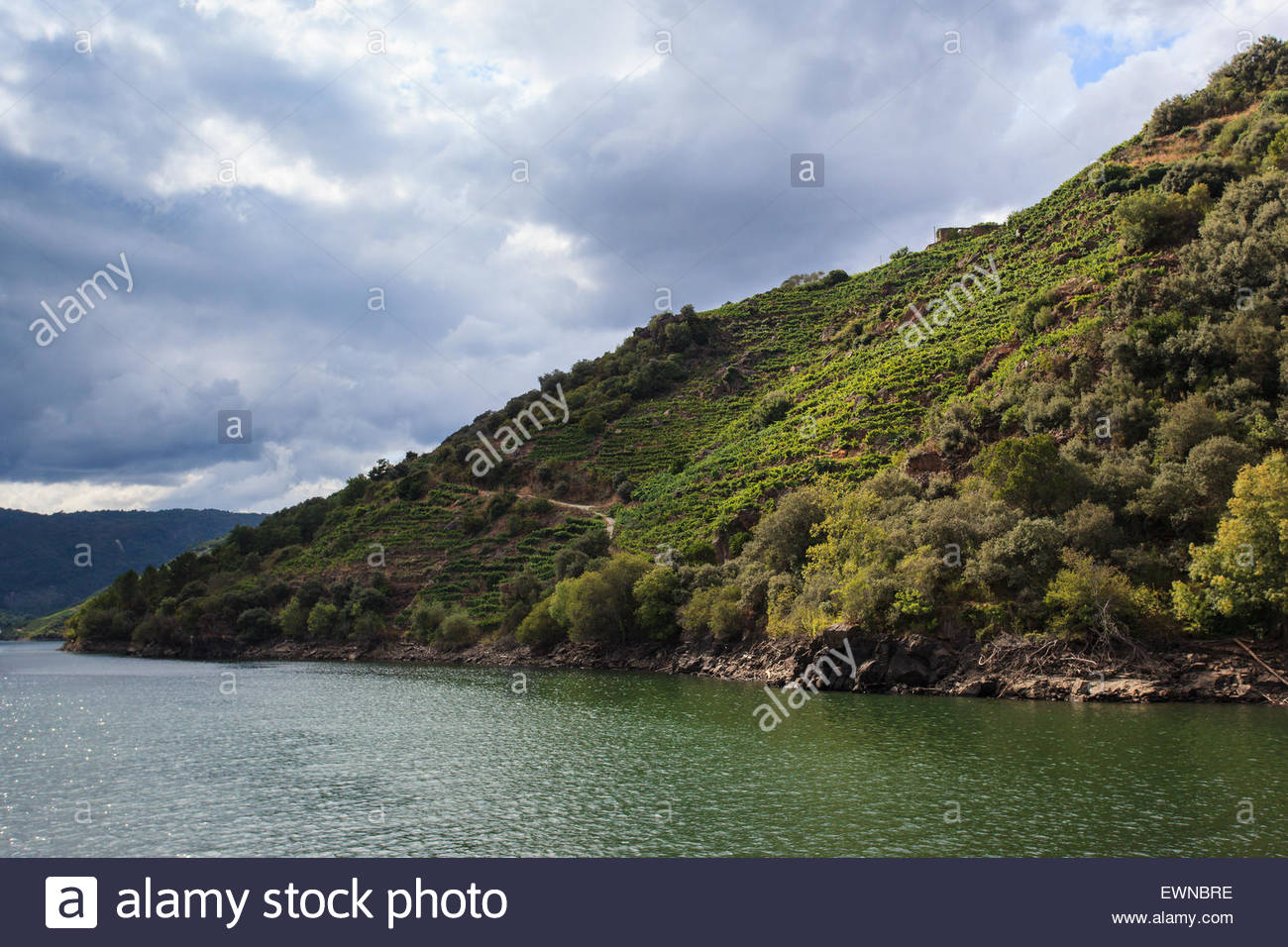 Ribeira Sacra vineyards in Galicia, Spain - Stock Image