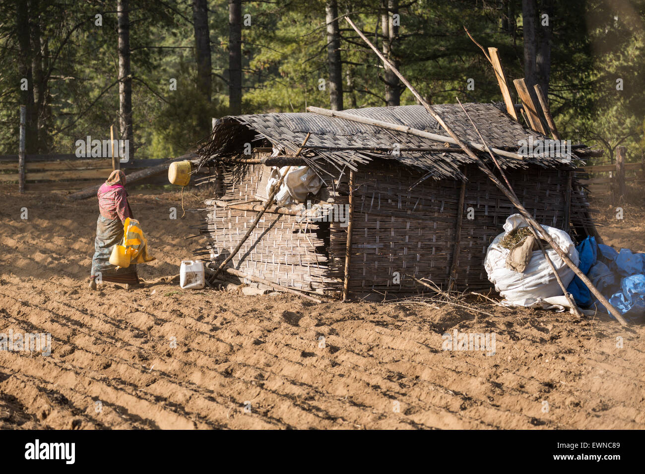 Potato farmer, Bumthang, Bhutan - Stock Image