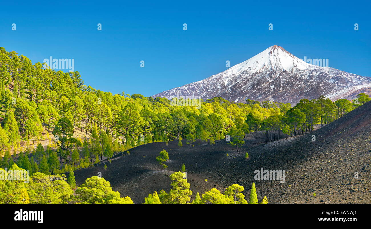 Teide National Park, Tenerife, Canary Islands, Spain - Stock Image