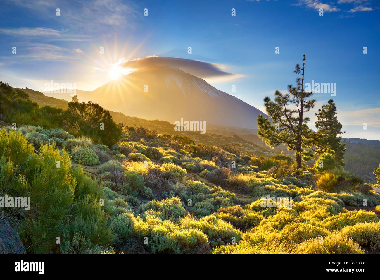Teide National Park at sunset, Tenerife, Canary Islands, Spain - Stock Image