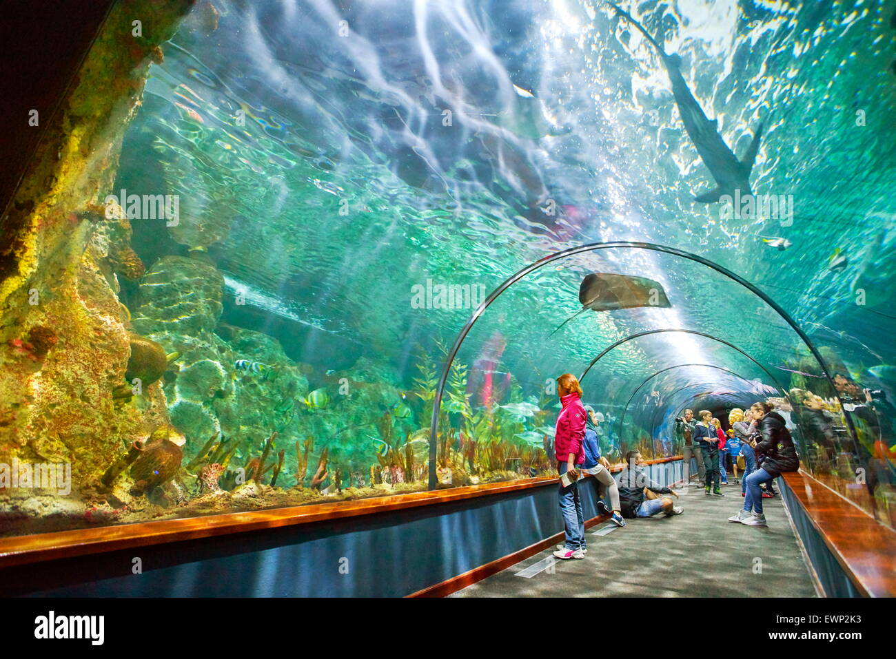 Aquarium in Loro Parque, Puerto de la Cruz, Tenerife, Canary Islands, Spain Stock Photo