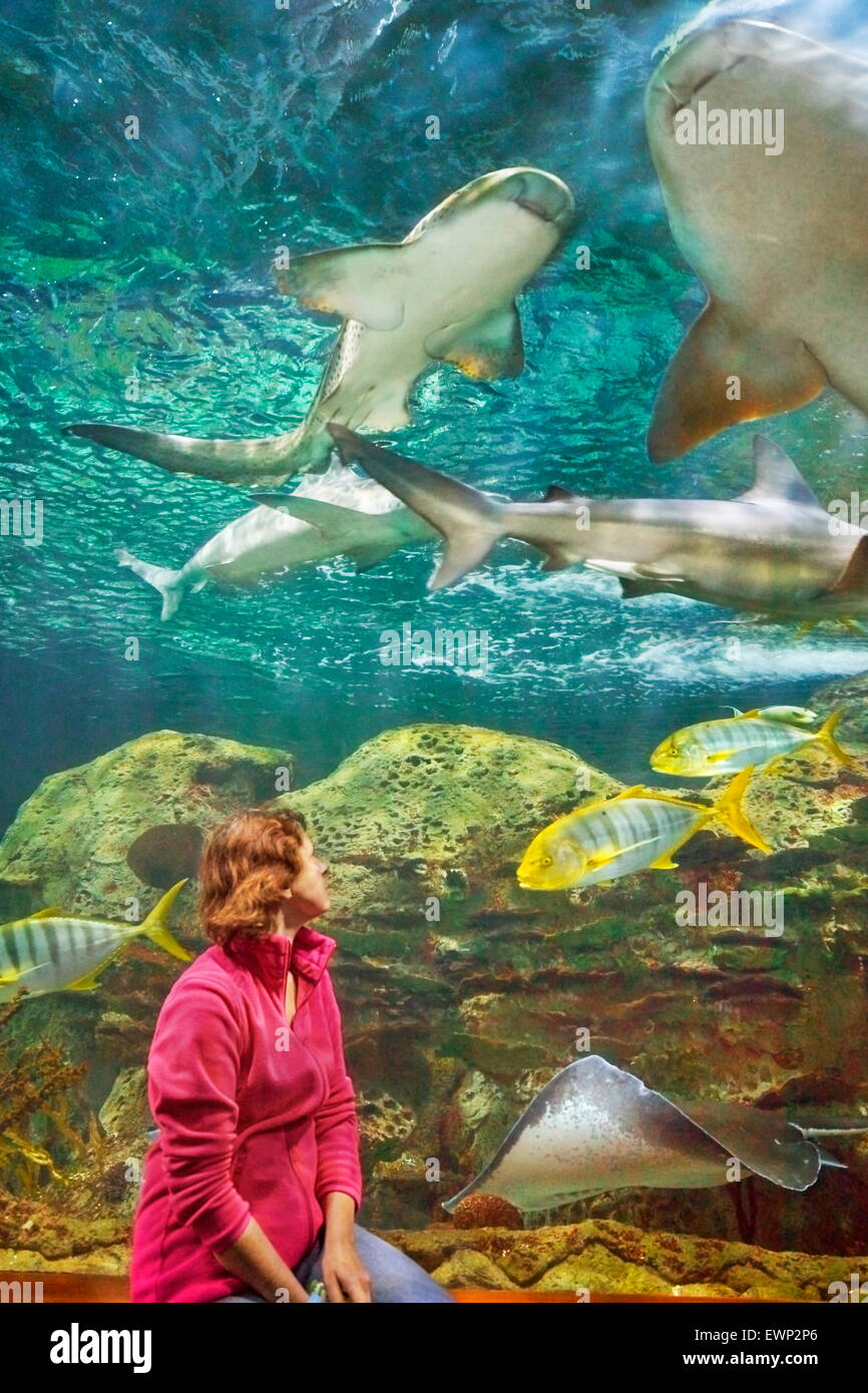 Sharks, aquarium in Loro Parque, Puerto de la Cruz, Tenerife, Canary Islands, Spain - Stock Image